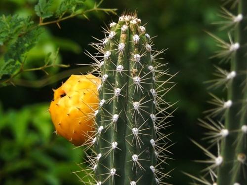 cactus5